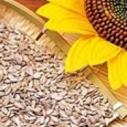 Брос Импорт Експорт ЕООД - производство на слънчогледово семе