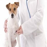 Ветеринарен кабинет  ветеринар в София - доктор Петя Чуканска