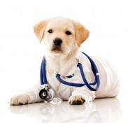 Ветеринарен кабинет в Димитровград - Карамилев и син