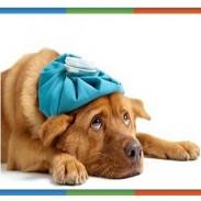 Ветеринарен лекар в Петрич - доктор Янчо Кантарджиев