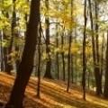 Горско стопанство и дървопроизводство Кеми 95 ЕООД
