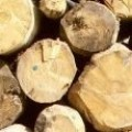 Добив и търговия с дървесина Йълмаз АУ ЕООД