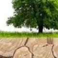 Дървен материал Марин Коев