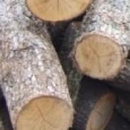 Дърводобив  Въглища  Дървен материал Руен лес ЕООД