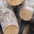 Дърводобив, Въглища, Дървен материал Руен лес ЕООД