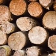 Дървопроизводство  Дърводобив Уел трейд 2011 ООД