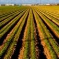 Зърнени растения и маслодайни семена ОЗК Съгласие, Загорци