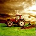 Зърнени растения, производство на маслодайни семена  Сливен