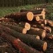 Иглолистна и широколистна дървесина ЕТ Кемал Бозов