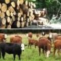 Кравеферма, Склад за дърва Мах 2000 ООД