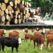 Кравеферма  Склад за дърва Мах 2000 ООД