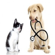 Лечение кучета и котки Балчик  Ветеринарна клиника  Балчик