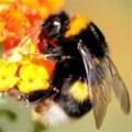Производство на пчелни кошери – Акация