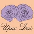Производство на рози - гол корен, пакетирани, в контейнер Iris Day
