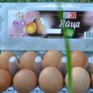 Производство на яйца от кокошки Консорциум Агробизнес АД