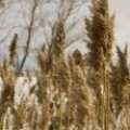 Растениевъдство и земеделие Земеделска кооперация Ламбриново