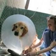 РОСВЕТ Росен Христов – ветеринарна клиника