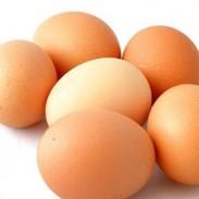Яйца  Отглеждане на кокошки - Димитър Илиев 05 ООД