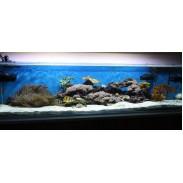 LMF изработка на аквариуми за омари  стриди  океански риби