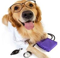 Ветеринарни специалисти